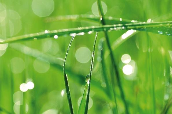 Recomservice e o Meio Ambiente